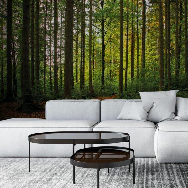 Painel Fotográfico Dcorando Floresta
